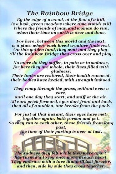 picture about Rainbow Bridge Poem for Dogs Printable identify Dog Sitting down, cat siting, pet strolling, right away sitting down